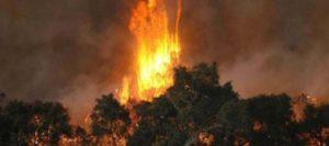 Bushfire recovery program