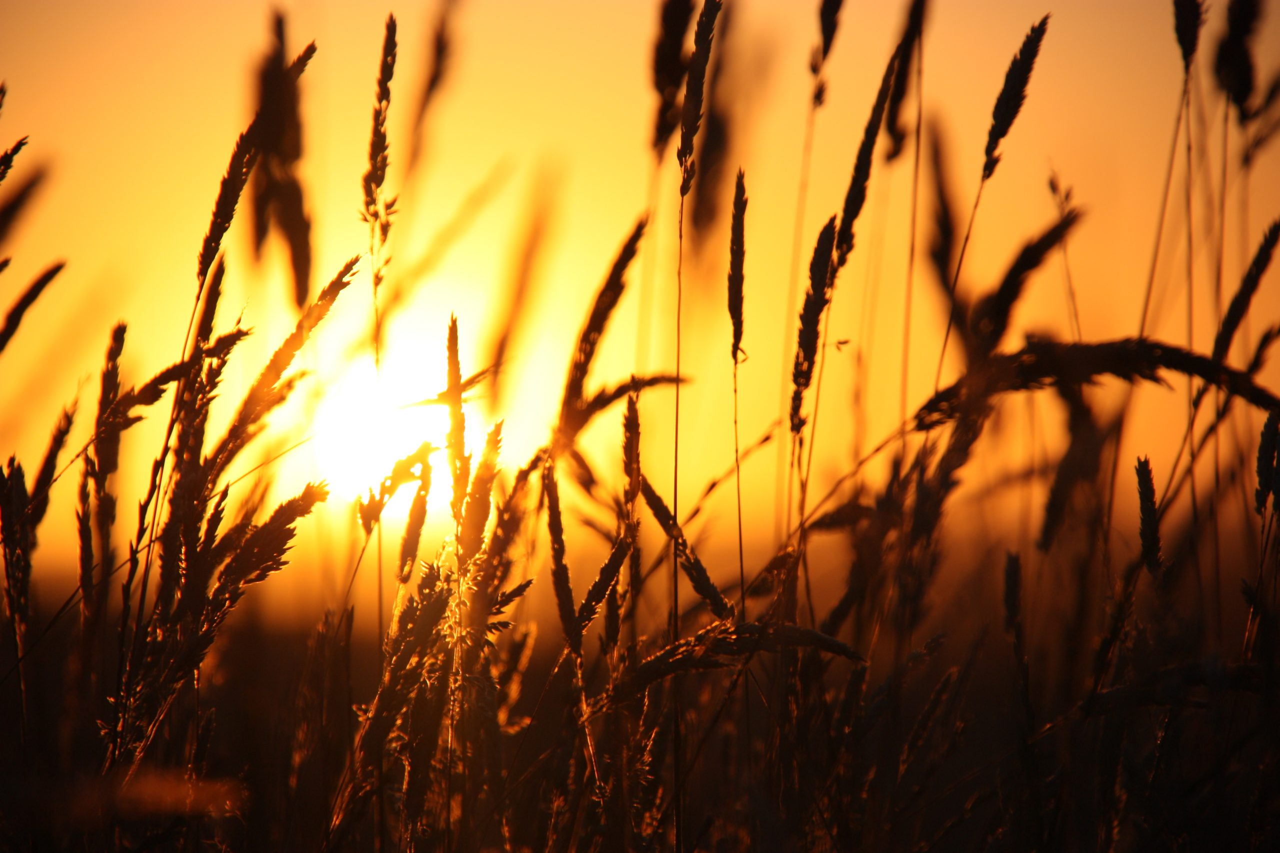 """Sweeping Grass in Sunset."" Image by Sophie Holcombe. 2012 Winner - 'Red Sky at Night' - Secondary Category"